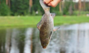 Поймать рыбу руками во сне мужчине