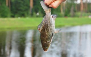 К чему снится рыба мужчине поймал руками