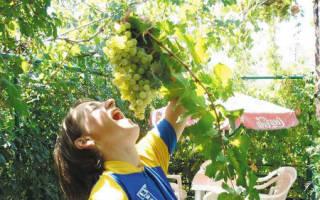 Сонник есть виноград