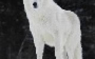 Видеть во сне белого волка