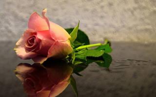 Розы во сне что означает