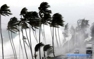 Сонник ураган