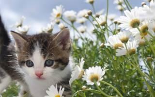 К чему снится котенок во сне женщине