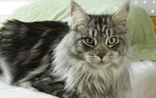 Большие добрые кошки снятся