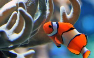Видеть во сне рыбу живую