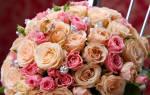 Сонник красные розы