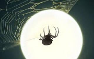 К чему снятся пауки на теле