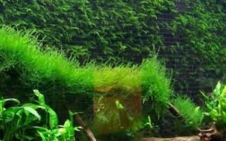 К чему снятся мальки рыб в аквариуме