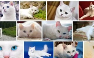 Сонник белая кошка на руках