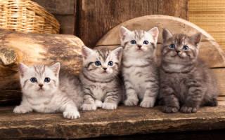 Видеть во сне котят маленьких