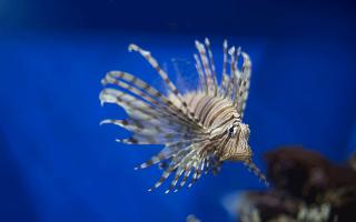 К чему снится аквариум с рыбками женщине