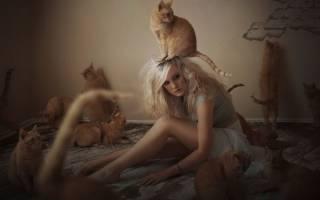 К чему снится рыжий котенок на руках