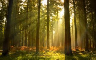 Видеть во сне лес