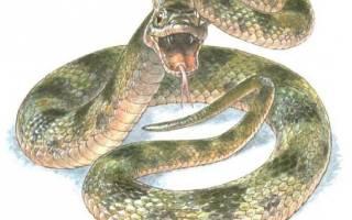 К чему снится змея которая пытается напасть
