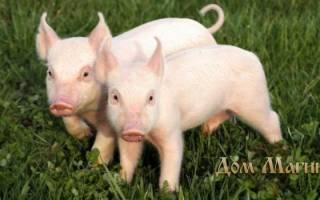 К чему снится свинка маленькая