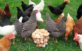 К чему снится курица