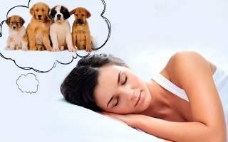 Видеть во сне много щенков