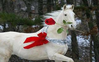 Сонник белый конь