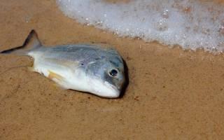 К чему снится умирающая рыба