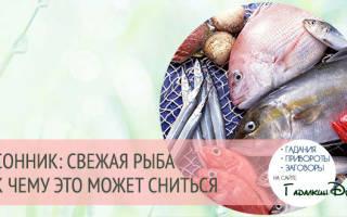 К чему снится мелкая рыба женщине