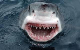 К чему снится акула в воде женщине
