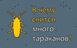К чему снятся много тараканов в квартире