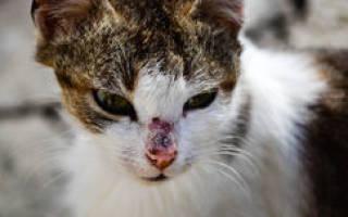 К чему снится кот в крови