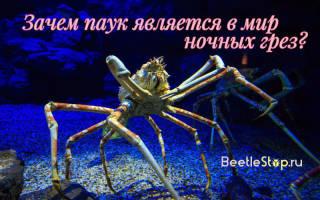 К чему снится паук большой белый девушке