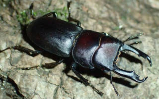 Большой жук во сне