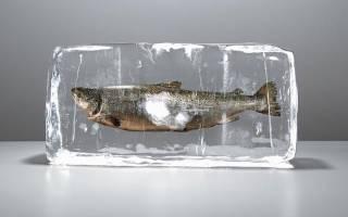 К чему снится свежемороженая рыба женщине