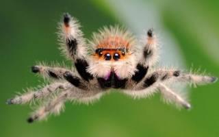 К чему снится паук с длинными лапами