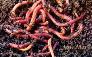 Видеть во сне много червей