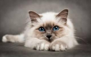 К чему снится убить котенка