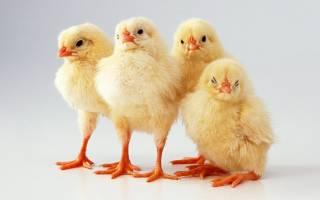 К чему снится много цыплят