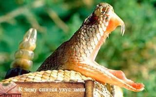 Сонник миллера укусила змея