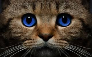 К чему снится кот который умер