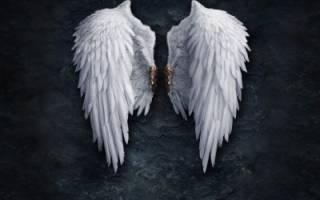 Сонник крылья
