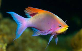 Сон рыба живая в воде
