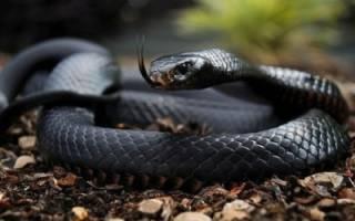 Змея гонится во сне