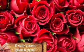Сонник красные розы у другой женщины