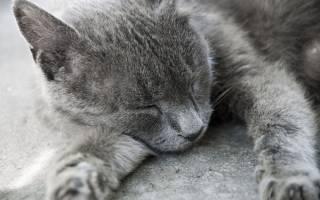 Снятся ли кошкам сны