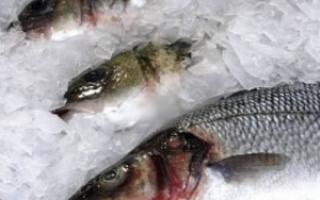 Сонник замороженная рыба большая