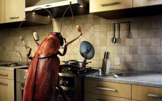 Сонник насекомое большое
