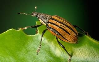 К чему снятся большие жуки