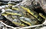 Сонник змеи много в доме