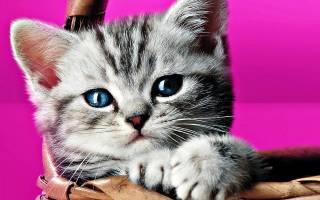 Сонник приснились котята