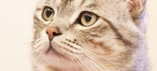 К чему снятся котята беременной женщине