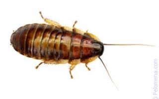 Убить таракана во сне