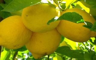 Есть лимон во сне