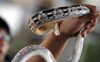 К чему снится змея женщине которая укусила